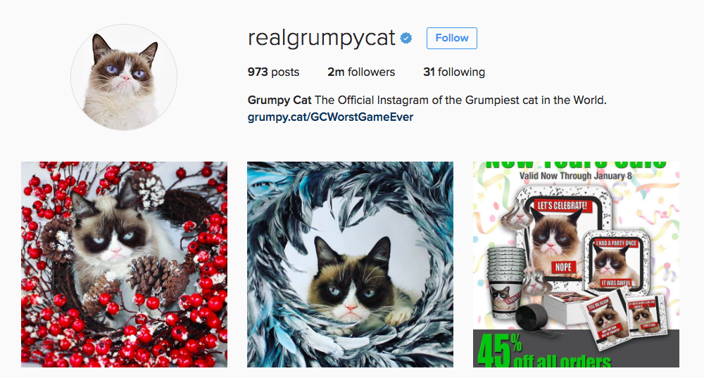 Grumpy Cat Instagram Influencer